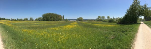 2016-05-09 Bodensee 5