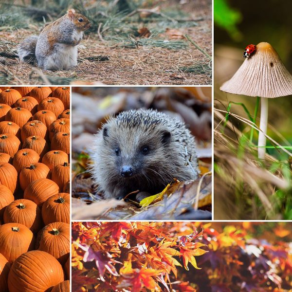 2016-09-22-herbst-collage